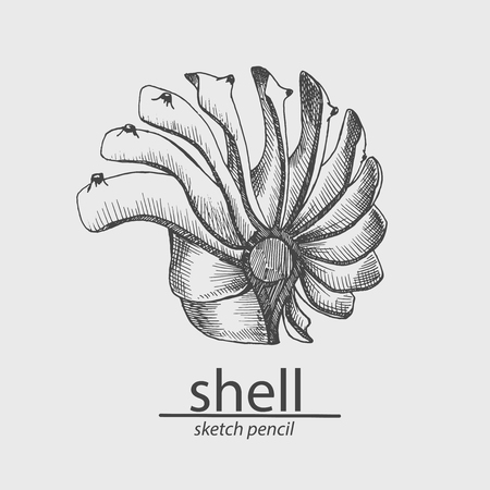 Sea shell. Marine resident. Animal. Sketch style. Drawing by hand. Vector illustration.