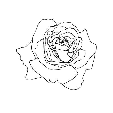 A line drawing of rose flower isolated on white background. Hand drawn sketch, vector illustration. Decorative element for tattoo, greeting card, wedding invitation, coloring book