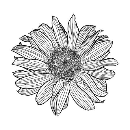 Sunflower flower black and white linear drawing isolated on white background, digital art, vector graphics. Design element for cards, invitations, banners, posters, print in line art style. Vector Illustratie