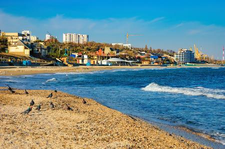 砕波に近い砂にハトの群れ。Chornomorsk、ウクライナ南西部のオデッサ州の黒海の海岸。