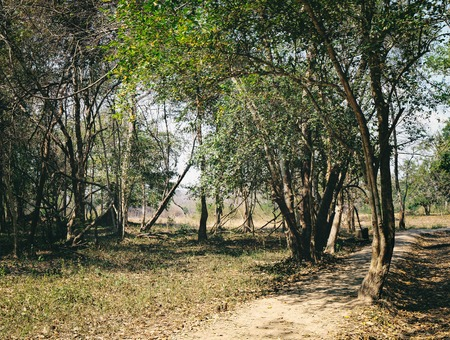 is green: A path through tropical jungle near Beng Melea Temple in Angkor Complex, Siem Reap, Cambodia. Beng Melea has been left largely unrestored, with trees growing among the ruins. Dry season without rain.
