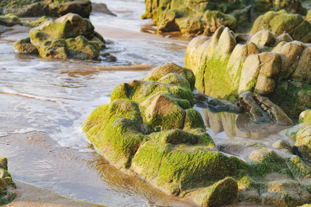 is green: Coast of the Andaman Sea with sea and rock in Nang Thong Beach, Khao Lak, Thailand. Rapid flow of water through the rocks covered with algae. Nature composition