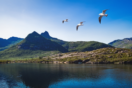 The landscape of Norway in the summer. View of Tofttjonna lake is nearby to Vestpollen village in Austvagoya Island, the north eastern most of the larger islands in the Lofoten archipelago in Norway.