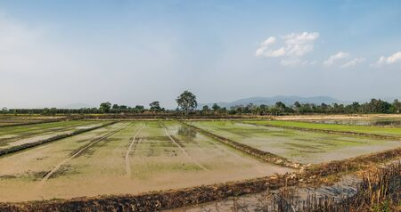 Typical rice field and local soil road in Chiang Rai, Thailand. Farm land scenic North of Thailand.