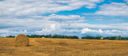 A typical natural landscape: yellow fields and dry haystacks. Panoramic view. Daytime countryside landscape under cloudy sky in Bohemia, Czech Republic, Europe