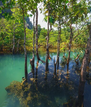 Tha Pom Klong Song Nam or Emerald Pool in Krabi Province, Thailand. Beautiful nature landscape with tranquil mangrove swamp, canals and tropical trees