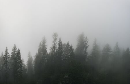 Silhouettes of pine trees in the fog. Panoramic view of pine forest located in area near Dachstein Mountains, Upper Austria, Austria. Stock Photo