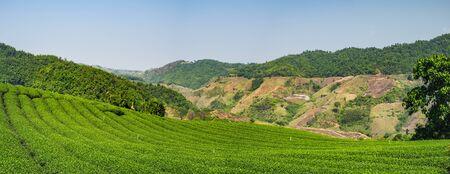 View of 101 Tea Plantation, located on Doi Mae Salong Mountain in Chiang Rai province of Thailand, near the Golden Triangle. Tea farm organic