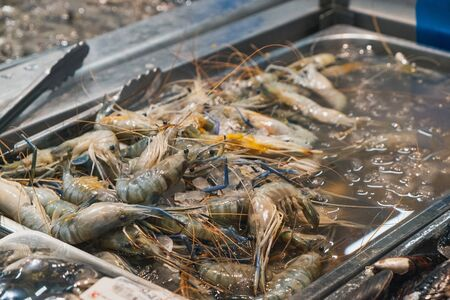 Fresh raw shrimps for sale at the seafood and fish market in Thailand. Food ingredients. Stock Photo