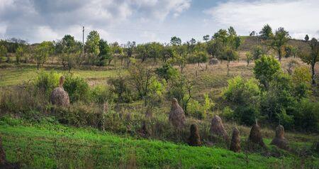 A typical natural landscape of Romania: green fields, dry haystacks and forest. Daytime countryside landscape