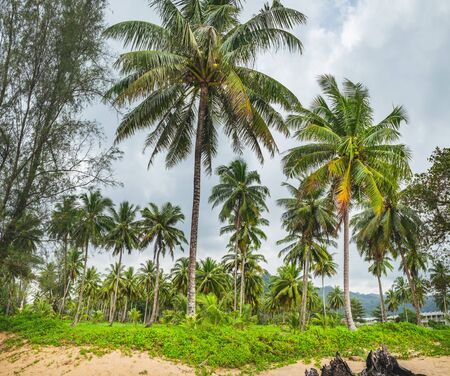 Relaxing on remote paradise beach. Untouched sandy Nang Thong Beach with palms trees in Khao Lak, Thailand. Summer holiday vacation background