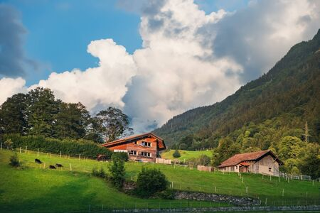 Sunset view of wooden houses and grazing horses in Innertkirchen village, Interlaken-Oberhasli administrative district in the canton of Bern in Switzerland.