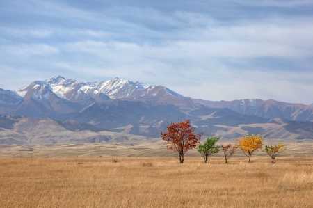 Autumn trees on background of mountains Tien-Shan, Kazakhstan photo