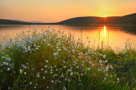 Chamomiles at the sunset lake on a high-mountainous plateau Ush-Konur, Kazakhstan photo