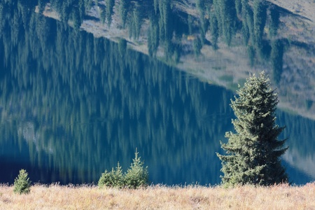 Fir-trees on background of reflections in the mountain lake Kolsai, Kazakhstan photo