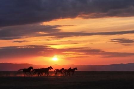 chevaux noir: Chevaux de course dans la steppe coucher du soleil