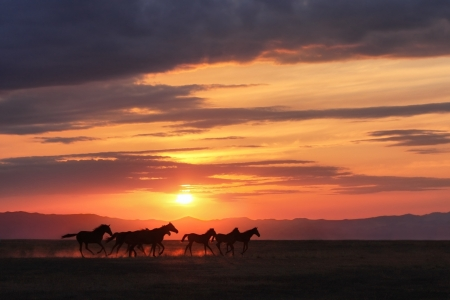 black horses: Running horses in the sunset steppe