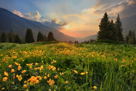 Glade of buttercups at sunset in mountains Tien-Shan, Kazakhstan