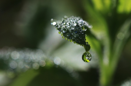 glob: Leaf in dew with reflections and flecks of sunlight