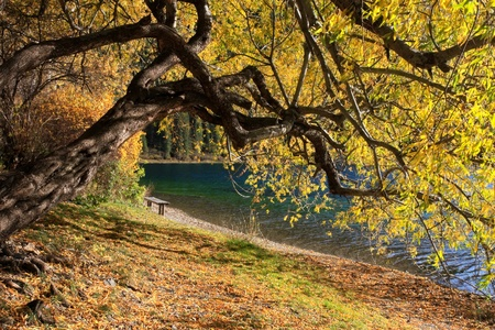Autumn tree and bench on the coast of the mountain lake Kolsai, Kazakhstan photo