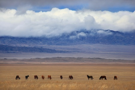 foothill: Group of horses in the autumn foothills on a background of cloudy ridge
