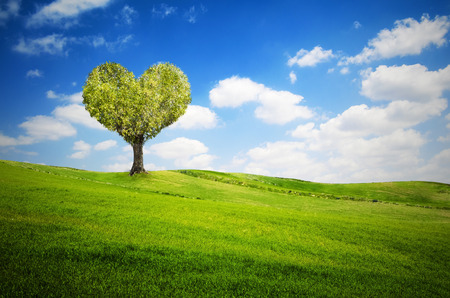 Tree in the shape of heart for valentines day photo
