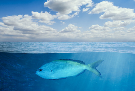 Underwater and Lonely Fish photo