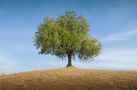 Single tree in a field and cloudy blue sky