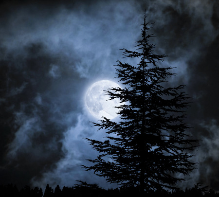 moonlit: Magic landscape with pine tree  under dramatic cloudy sky at full moon