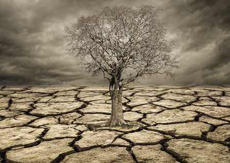 Global warming concept. Lonely  tree under dramatic Clouds Standard-Bild
