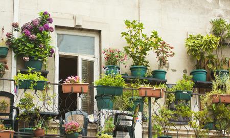 Small herb and flower garden built on terrace Standard-Bild
