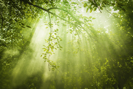 green forest: Rays of sunlight and Green Forest