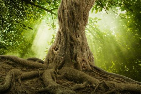 tronco: grandes ra�ces de los �rboles y el sol en un bosque verde Foto de archivo
