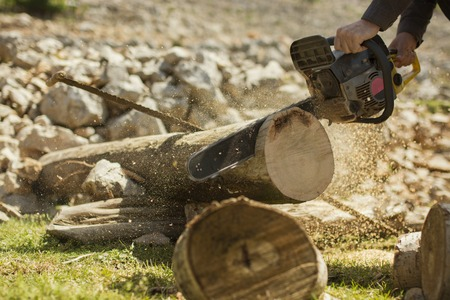 forestry industry: Man sawing a log in his back yard.