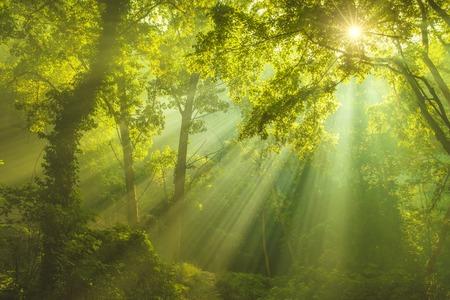 太陽の光と緑の森の光