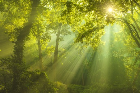 luminous: Rays of sunlight and Green Forest