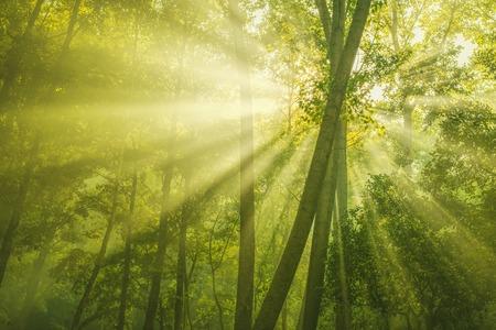 słońce: Promienie słońca i zielonym lesie