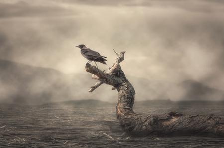 De kraai perst op boom in mistig weer