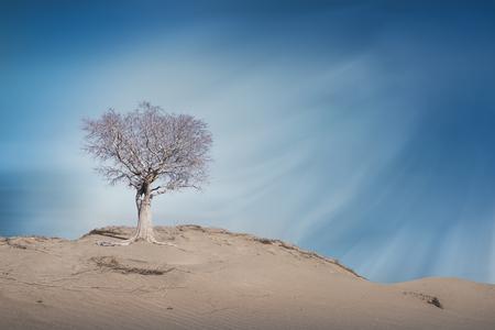 vlei: Dead Tree at Desert, Stock Photo