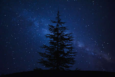 vulpecula: Silhouette of Pine Tree and Milky Way