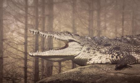 animales silvestres: El cocodrilo, animales salvajes de sangre fría Foto de archivo