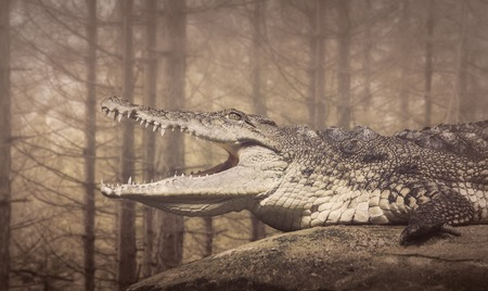 coldblooded: The Crocodile,coldblooded wild  animals