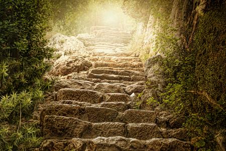 paisagem: floresta sonhadora Imagens