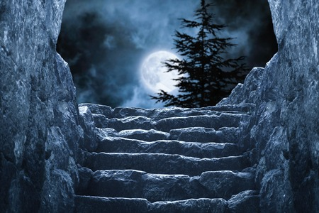 mystical forest: Mysterious full moon pinewood Stock Photo