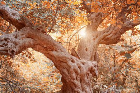 saturate: autumn scene,natural season landscape with leaves Stock Photo