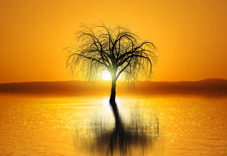 Image of sunset with tree reflection in water Stock Photo