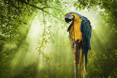 Macaw parrot and Rays of sunlight on Green Forest
