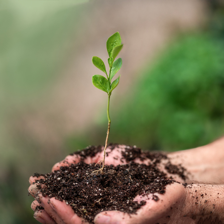 Young plant on soil in a hand of an farmer. Stock Photo
