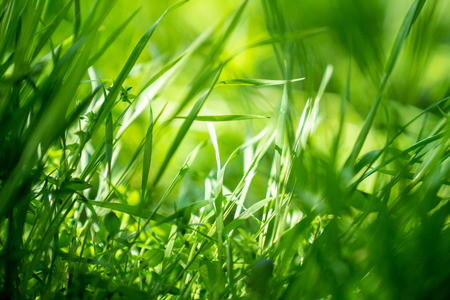 Spring or summer background with green grass.Environment concept Stockfoto