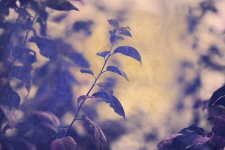 grunge floral background with leaves of a tree.